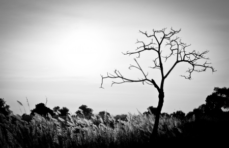 natural  moody: Dead tree black and white