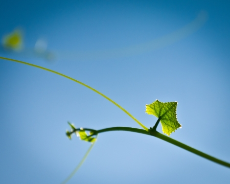 Fresh green leaf in morning blue sky photo