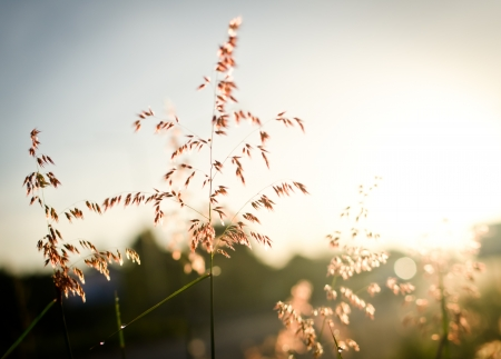 flower grass on morning fresh time Stock Photo