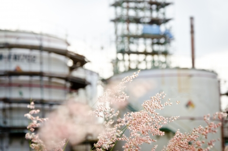 flower grass and petrochemical plant background photo