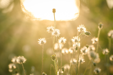 beautiful vintage flower grass in relax morning time