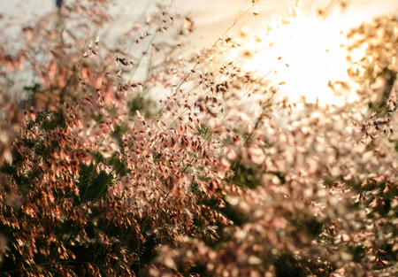 flower grass at relax morning time with warm tone vintage Stock Photo