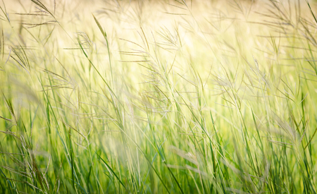 flower grass at relax morning time Stock Photo