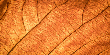 wallpaper vibrant: Close up of colorful autumnal dry leaf