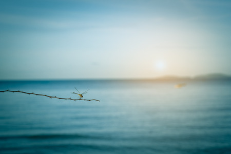 dragonfly on tree branch with sea and blue sky background,instagram  color tone Stock Photo