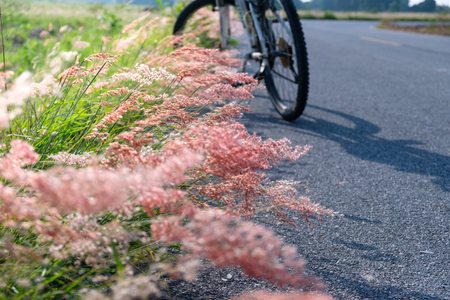 Blurred   flowers on side road and bicycle is parked at morning time. Stock Photo