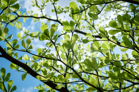 green leaves on blue sky background summer