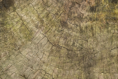 Brown old wood texture background, rings of a old tree