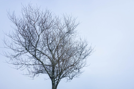 leafless: Leafless tree in the winter