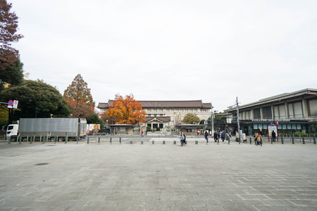 largest tree: people enjoy travelling at Tokyo National Museum taken in Japan on 3 December 2016 Editorial