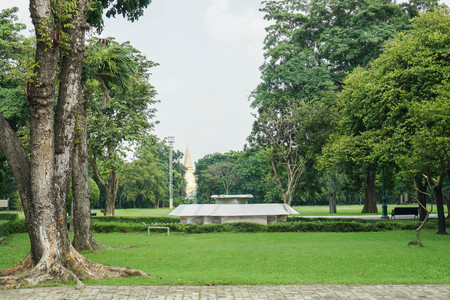 tall giant tree with green lawn in public park for holidays