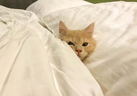 little kitten Persian sleep on white people bedding and blanket Фото со стока