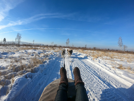 close up woman winter boot shoes on Siberian Husky dog sled in Irkutsk, Russia