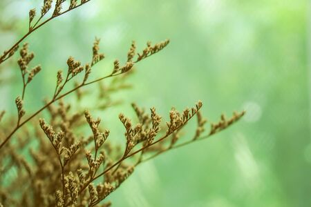 selective focus dried grass flower in vase for home vintage decoration Stock Photo