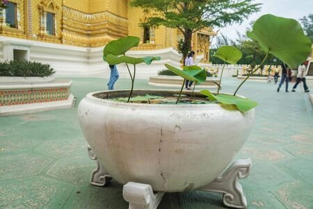 green lily pad in outdoor ceramic pot in temple