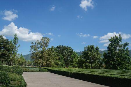 wooden walkway along the green garden in bright blue sky in summer