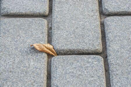 close up falling leaf on the concrete fall in autumn season