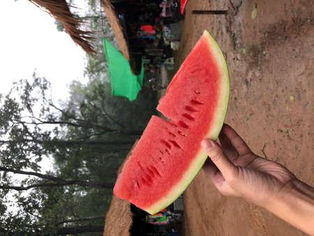 eating fresh watermelon slice at Phu Kra Duang National Park 版權商用圖片