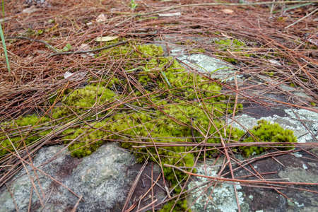 green moss grow on moist rock in deep rainforest
