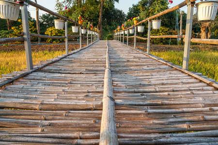 selective focus on long bamboo bridge on the rice farm paddy