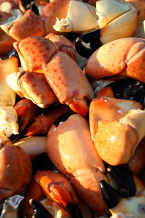 Stone crab claws background Stock Photo - 6449995