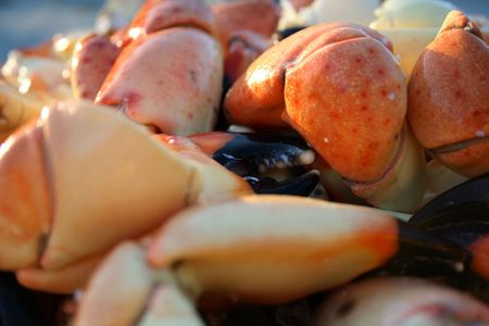Stone crab claws background photo