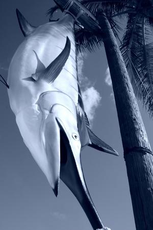 swordfish: Swordfish hanging from wooden rack in monochrome