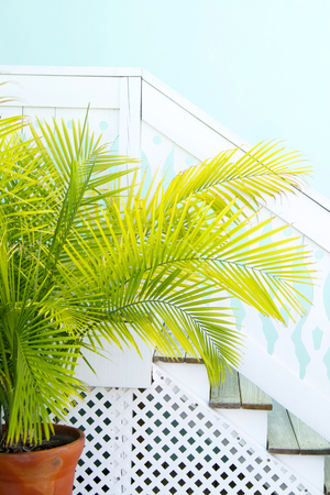 areca: Coastal style wooden stairs with an areca palm Stock Photo