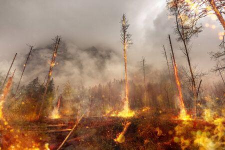 Bosbrand - brand - natuurramp Stockfoto