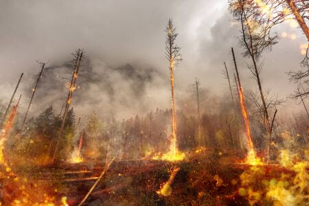 Forest fire - fire - natural disaster Фото со стока