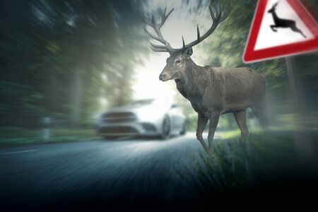 Wild accident - deer - road traffic Фото со стока