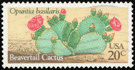 UNITED STATES OF AMERICA - CIRCA 1981: A stamp printed in USA shows Beavertail Cactus (Opuntia basiliris), circa 1981
