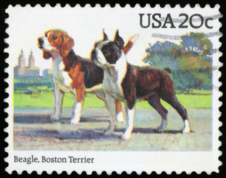 UNITED STATES OF AMERICA - CIRCA 1984: A stamp printed in USA shows beagle and Boston terrier, circa 1984