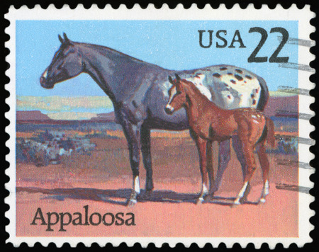 SA - CIRCA 1985: A stamp printed in the United States of America shows Appaloosa horse, circa 1985