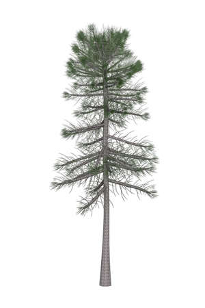 Pine tree isolated on white background - 3d render