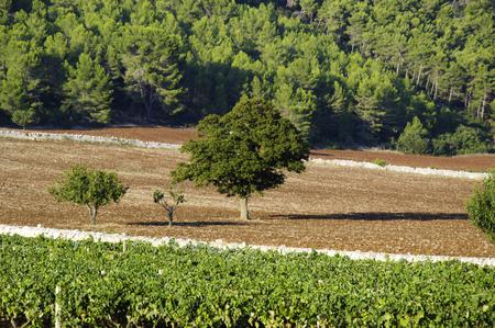 wine country: Italian wine Puglia country Stock Photo