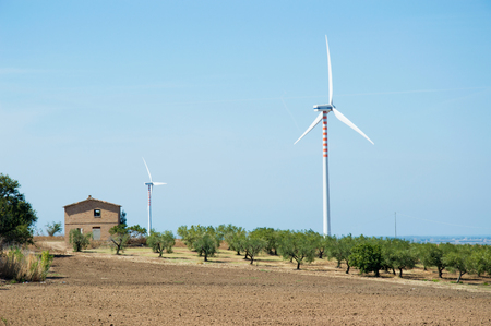 wind force wheel: Windmills among olive trees in the countryside to produce clean energy