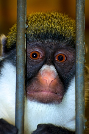 Monkey behind bars,  i photo