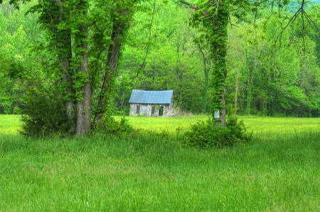 Abandoned cabin framed in the green of spring  photo