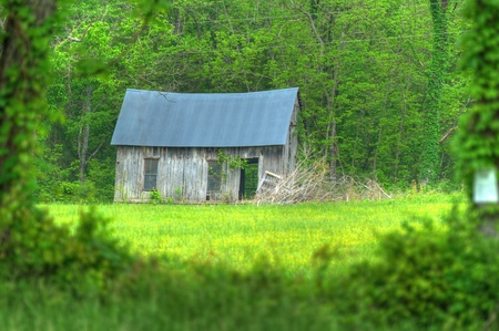 Abandoned cabin framed in the green of spring Stock Photo - 13504887