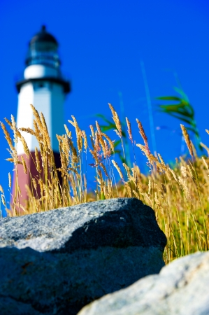 Ocean Grasses and Rocks with lighthouse in background. photo