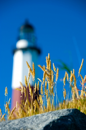 Ocean Grasses and Rocks with lighthouse in background. Stock Photo - 14556483