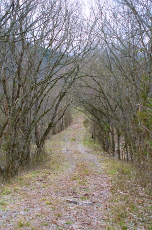 Gravel road in Ozark Mountains in mid winter. Stock Photo