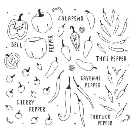 hand drawn vector illustration, various kinds of pepper vegetable. Simple colorful handdrawn drawing of cayenne, tabasco, chili, bell, sweet sorts. Cooking ingredient isolated element in sketch style.