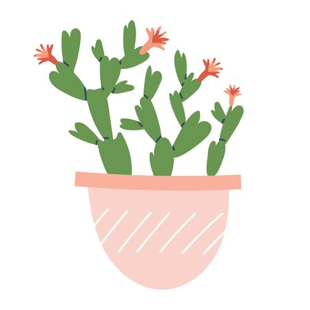 Christmas cactus, Schlumbergera house plant potted. Cute simple vector illustratio of december symbol green plant with pink flowers isolated on white. Decorative indoor plant clip art.