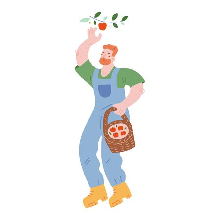 Gardening man picking apples and collecting fruit in wicker basket, cute male character, farmer in denim overalls with beard. Isolated vector illustration, modern hand drawn cartoon style.