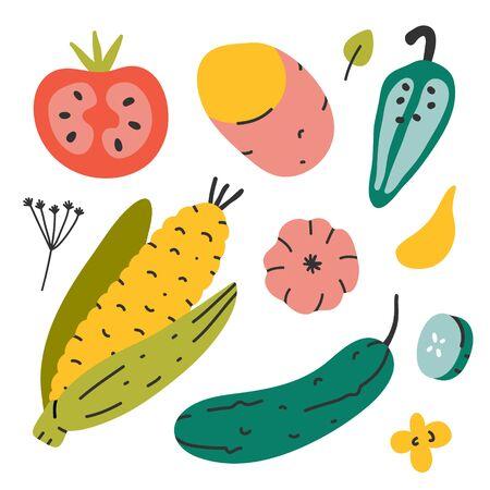 Vegetables collection, farming organic veggies isolated on white. Cucumber, corn, potato and tomato, vector illustration of fresh ripe vegetable harvest, modern flat cartoon style.