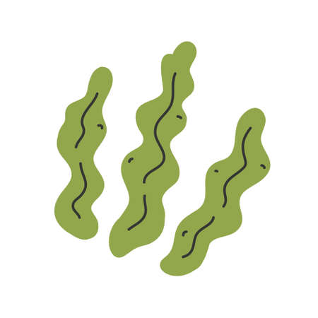 Kelp isolated, seaweed leaves icon, hand drawn vector illustration, healthy foods ingredient