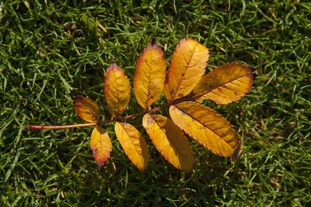 singular: Singular Leaf