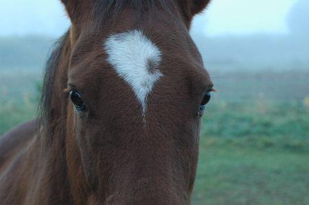 Horse cose-up Stockfoto